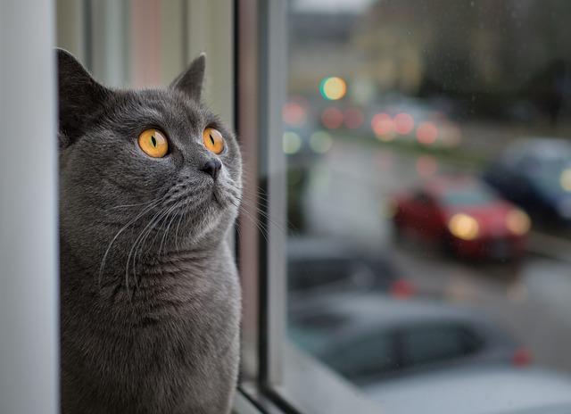 cat_kitty_kitten_pussycat_coin_info_news